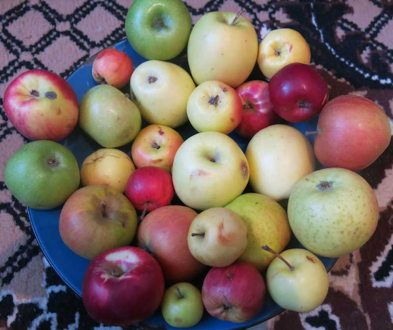 Kazakhstan apples