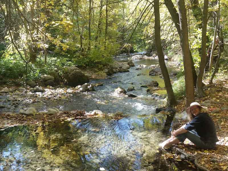 Picturesque deciduous forest with flowing stream - such a contrast to the surrounding dry hills