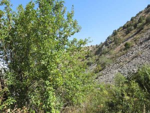 The apple trees occurred mostly in the relatively moist pockets - in contrast to the dry, rocky slopes surrounding them