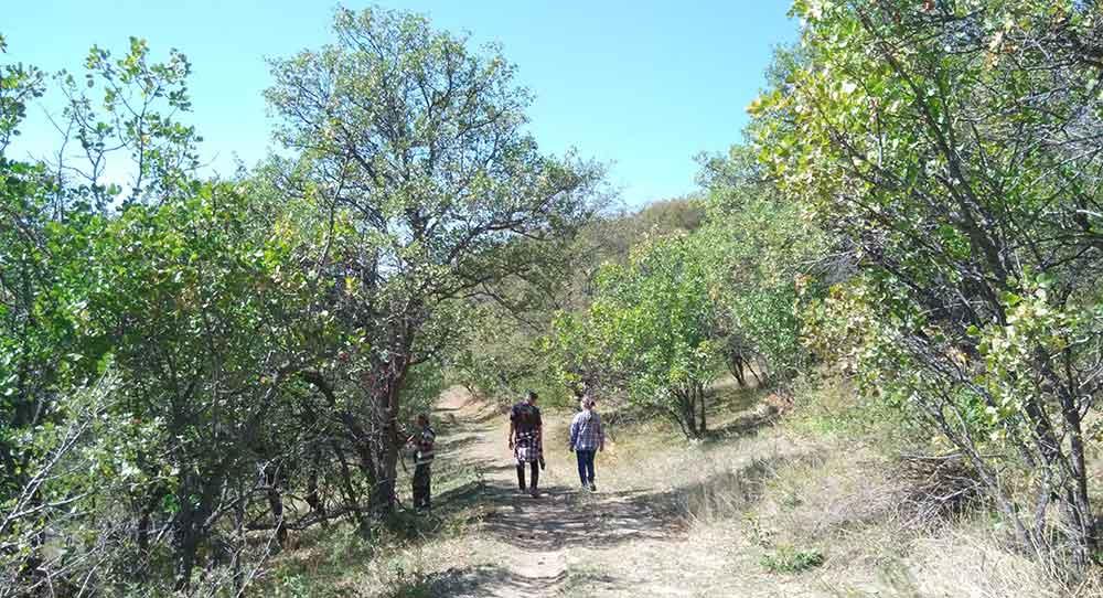 pistachio-walk2
